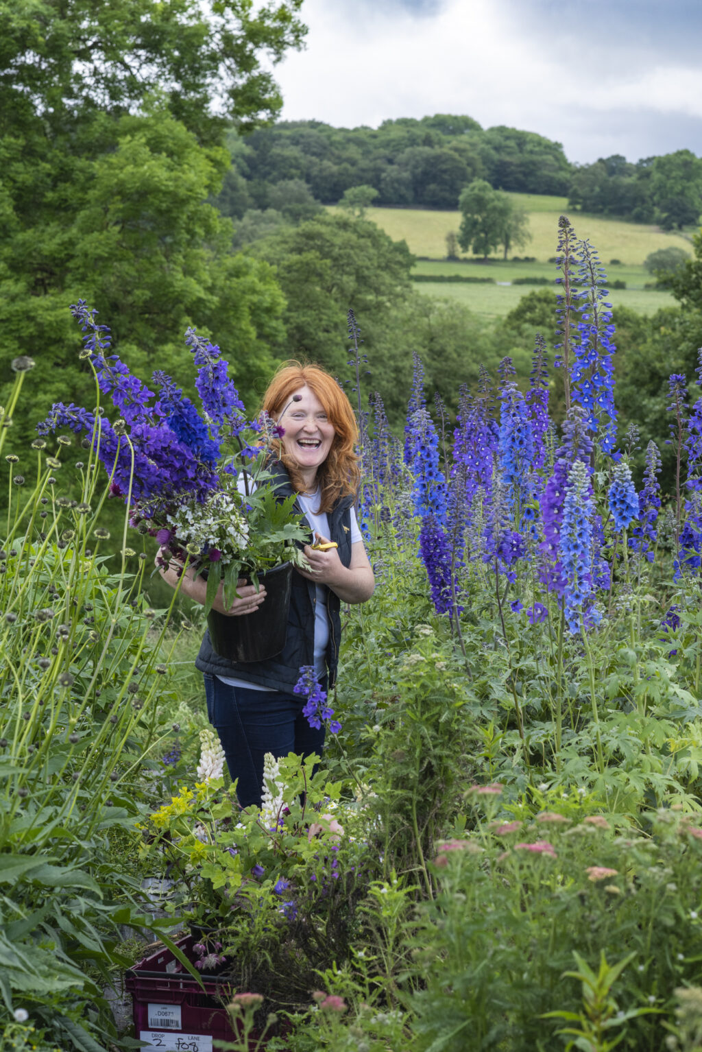 Pam of Quirky flowers stands in her flower field surrounded by tall blue spires of delpiniums in the Staffordshire landscape. She's holding a bucket of cut flowers as she laughs with the photographer. Photo: Nicola Stocken.