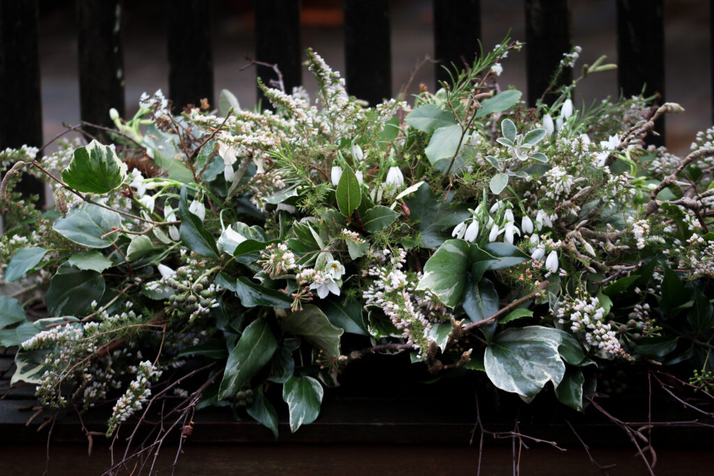 A winter foam free funeral casket spray made with white heather, snowdrops, scented narcissi and seasonal evergreen foliages. By Tuckshop Flowers.