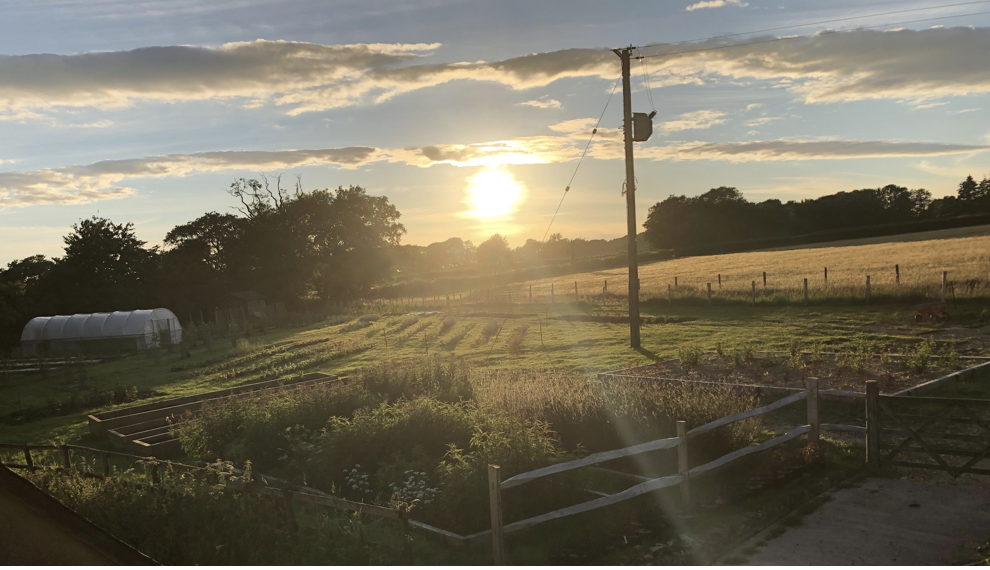 The sun sets of Yalham Hayes From Farm in Somerset. Nestled beneath the tree line, the light glints of the polytunnel used for raising British grown cut flowers. In the foreground, the fenced growing area with raised beds is full of tall flowers which are silhouetted in the low light.