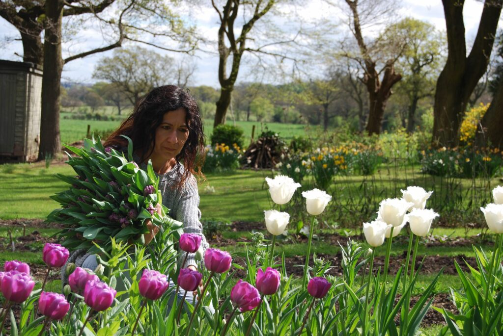 Emma of Urban Flower Farmer cuts purple tulips from her cutting garden in spring against a backdrop of flowering yellow daffodils and narcissi.