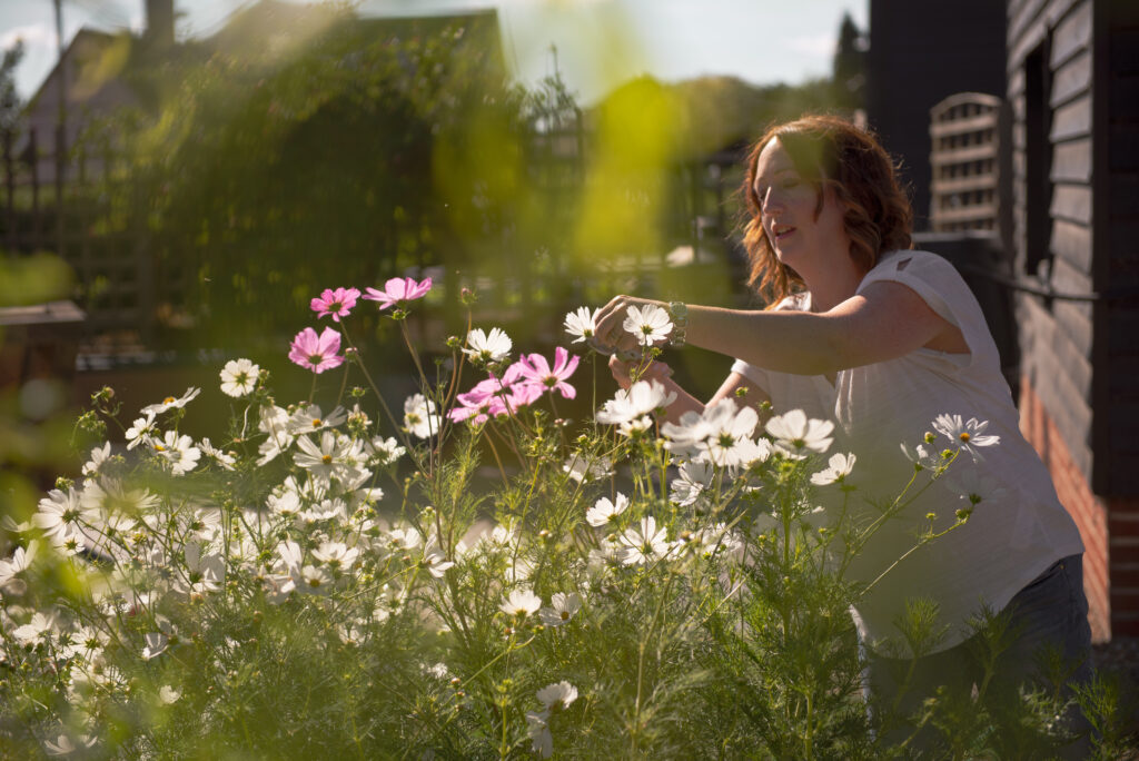 Naomi of Blooms from the Barn cuts white and pink cosmos from her cutting patch as the sun loses its heat late in the afternoon in summer.