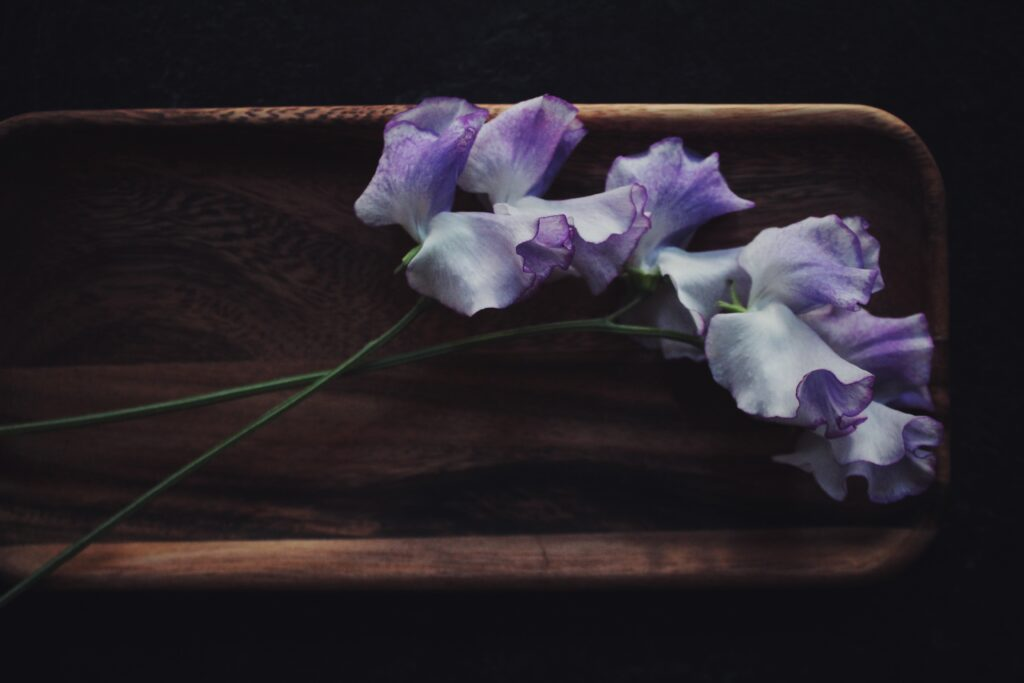 A stunning portrait of a single stem of a softly shaded blue picotee sweet pea by Blue Hill Flora, set against a dark vintage style backdrop.