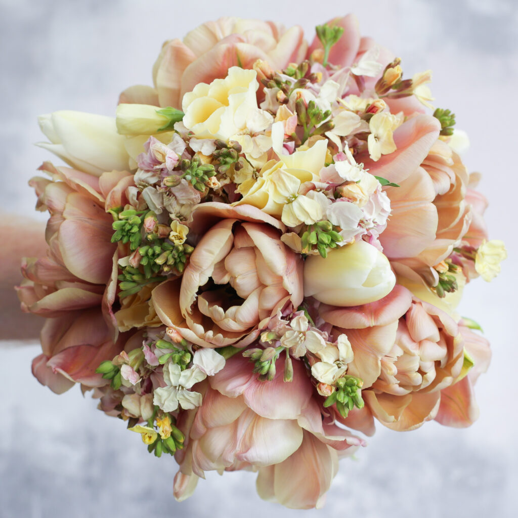 A cappucino toned wedding bouquet of voluptous coffee coloured Belle Epoque tulips, mixed with pale lemon wallflowers and smaller tulips. Photo: Cotswold Posy Patch.