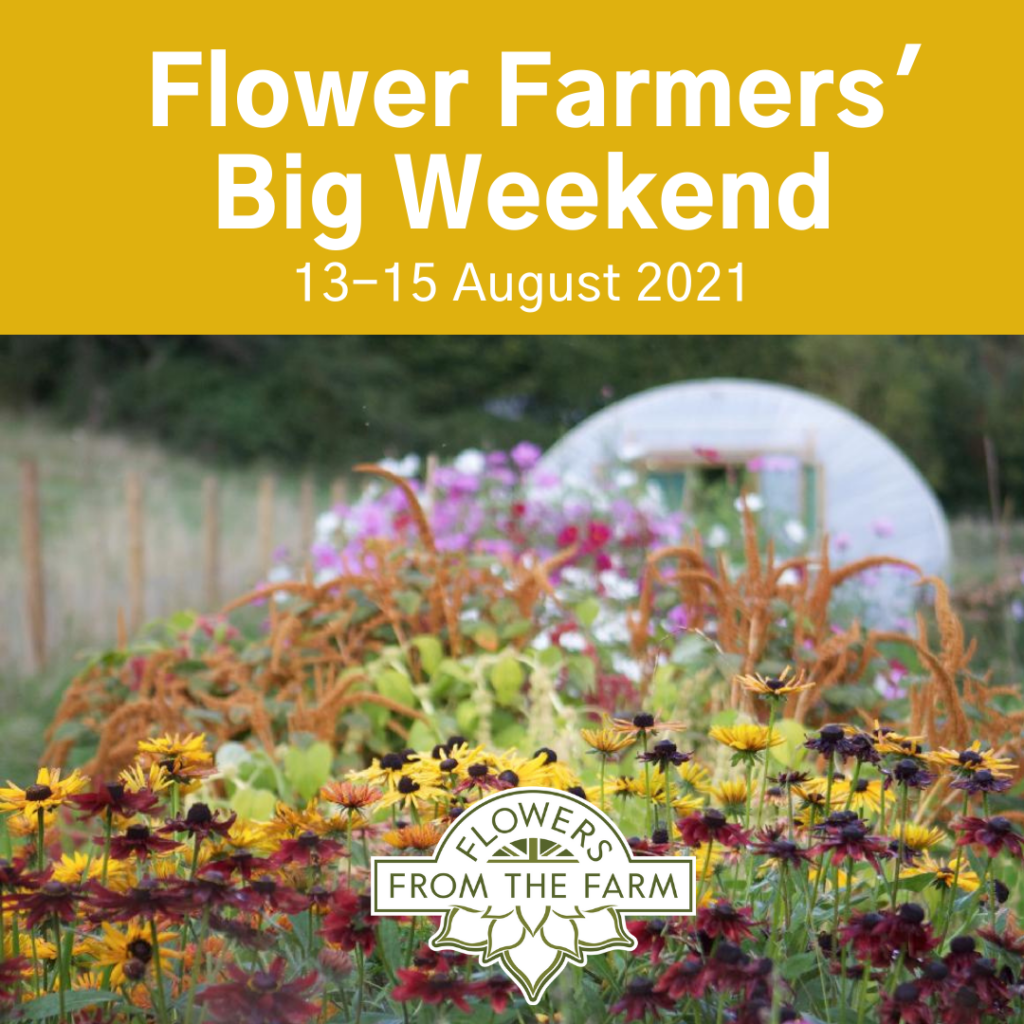 The instagram graphic for The Flower Farmers Big Weekend features a cut flower bed at Floriferous packed with rich late summer colours, with a grass path leading towards the polytunnel on her flower plot.