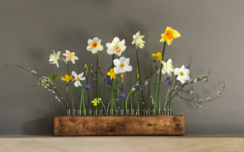A line up of test tubes in a wooden holder is used to hold cheerful narcissi, blue grape hyacinths and blossom in this simple display by Henthorn Farm Flowers.