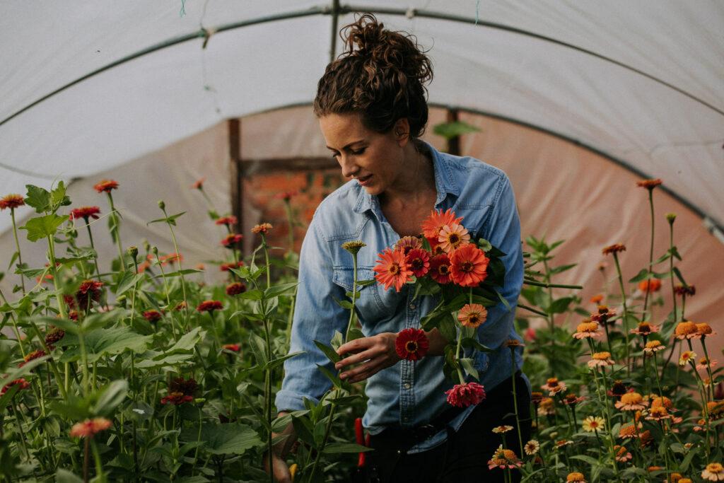 Keythorpe Hall Flowers - British flower farmer cutting dahlias. Photo by Shoot It Momma.