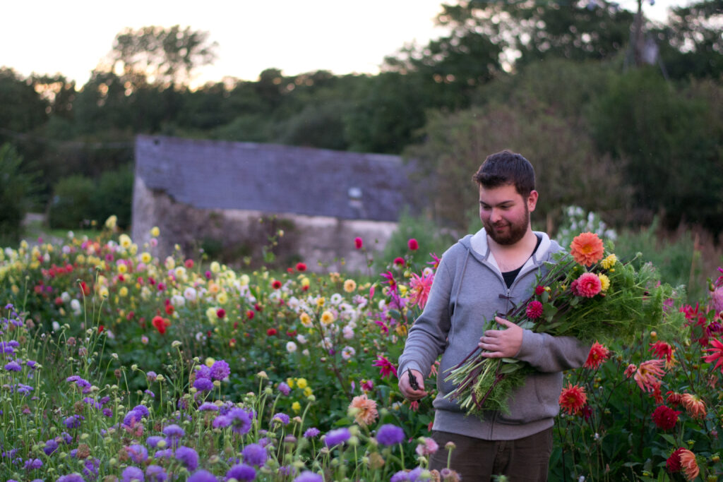 Alex of No.21 Flowers harvests brightly coloured dahlias from his flower farm as the sun sets in late summer.