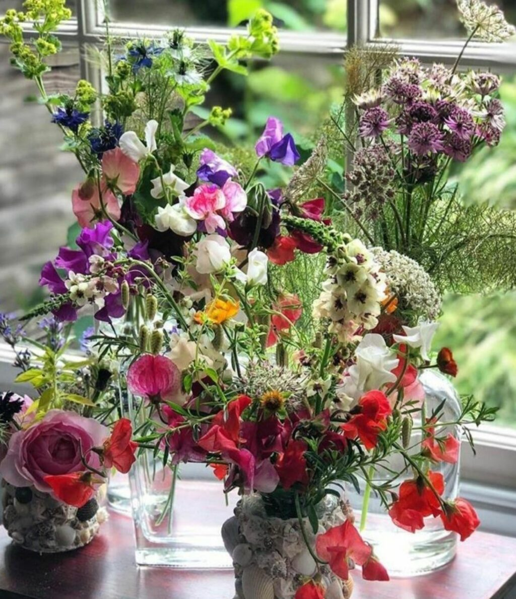 A collection of vases sit on a polished wood table in front of a window. They are filled with British cut flowers - sweet peas, astrantia, quaking grass, lady's mantle, roses.... by Posy Flowers.
