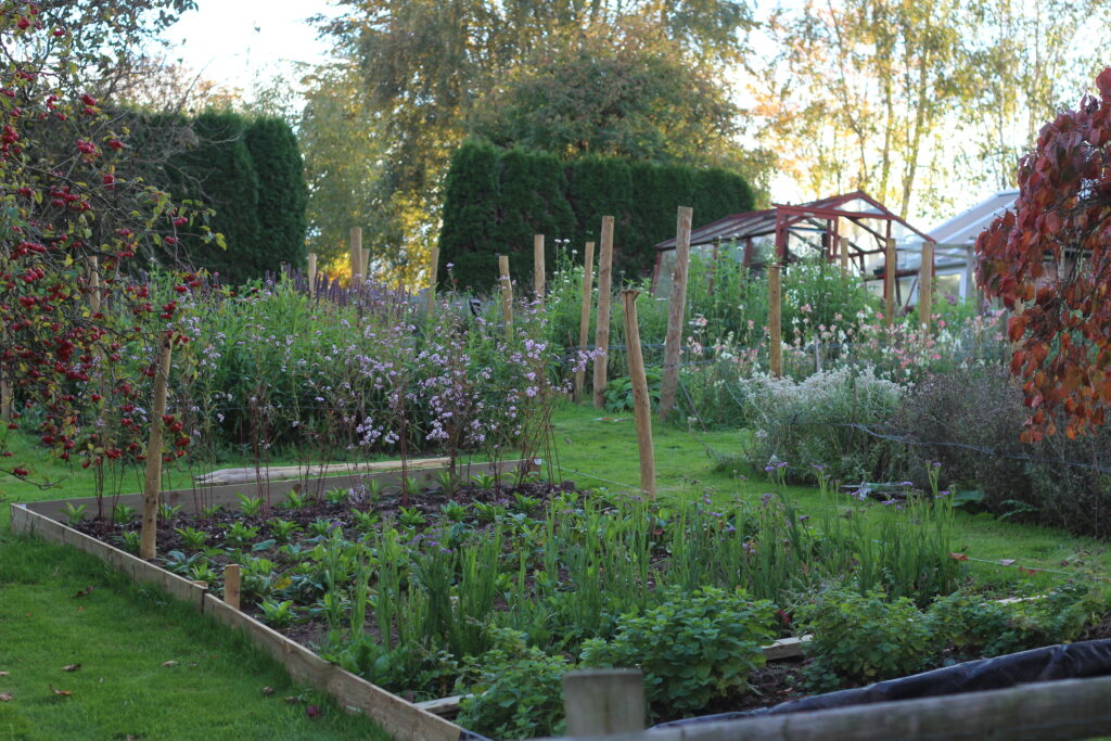 An overview of the growing area with raised beds at Ravenshill Flower Farm. The timber framed greenhouse overlooks the cutting beds.