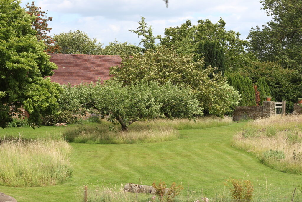 A peek at the garden beyond the cutting beds. A mown grass path snakes between shrubs and wilder areas.