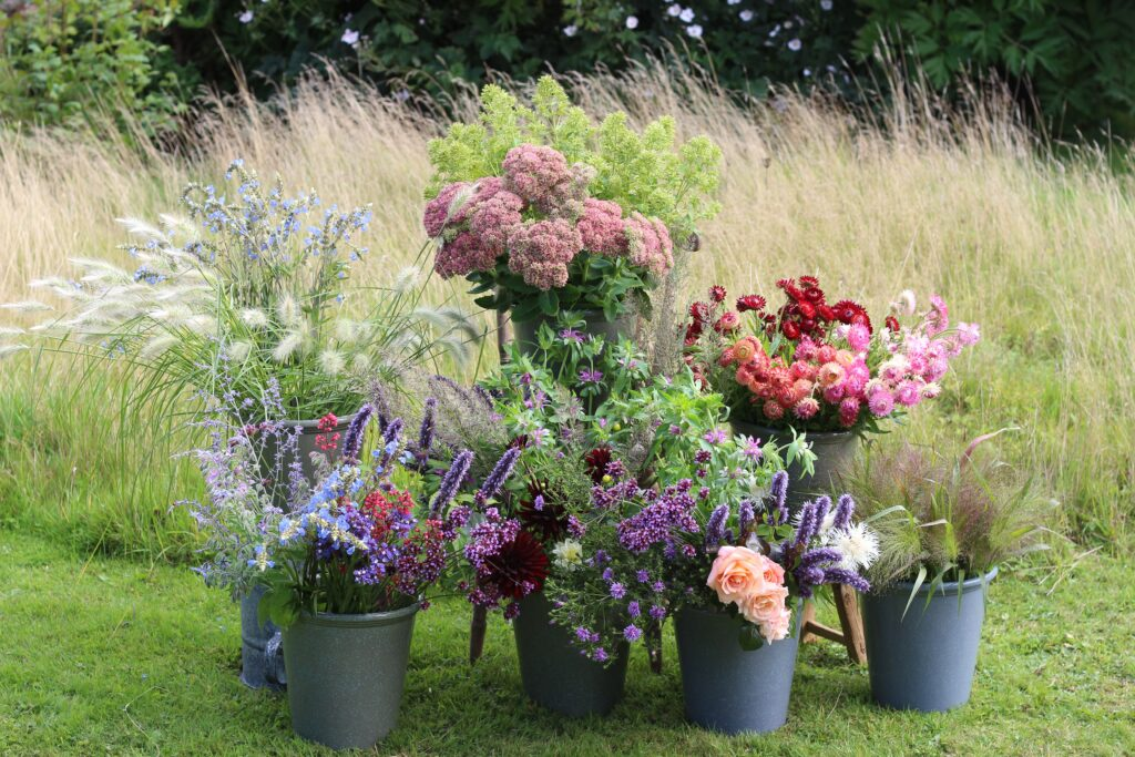 An array of 7 buckets of freshly cut British flowers, arranged against the backdrop of long grass borders in the flower field at Ravenshill Farm. Gloriously scented Korean mints, bergamot and borage jostle with fluffy grass seedheads, rustling strawflowers and perfumed peach roses.