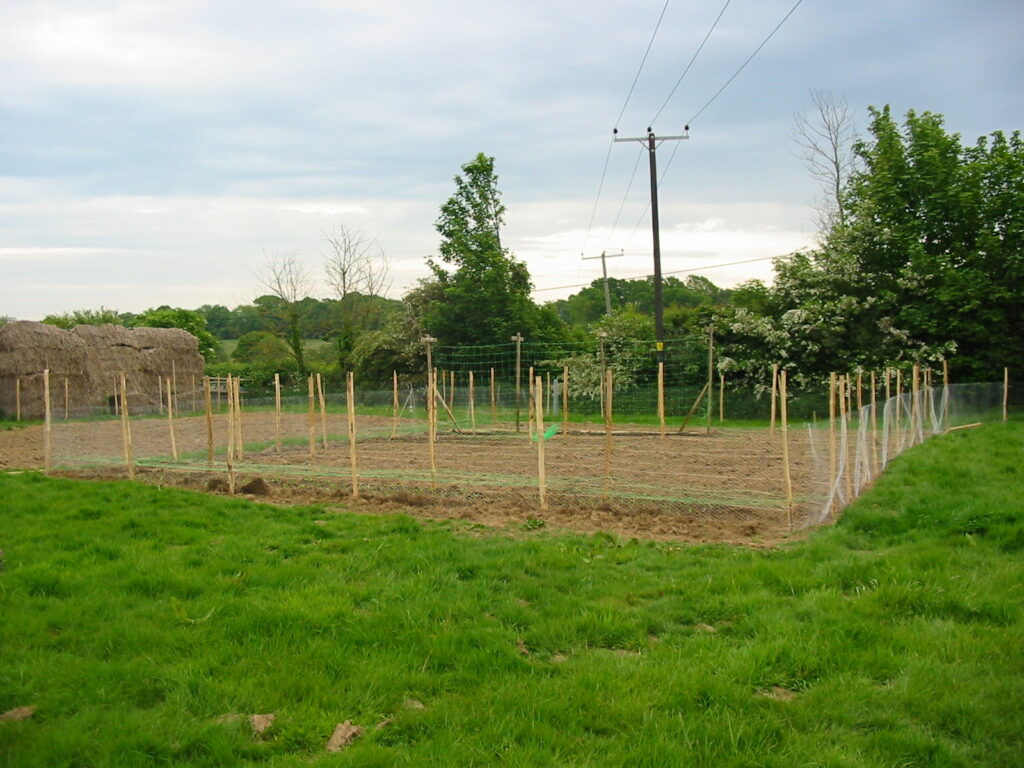The early days of Sussex Cutting Garden when the plot was one step up from a grassy field.