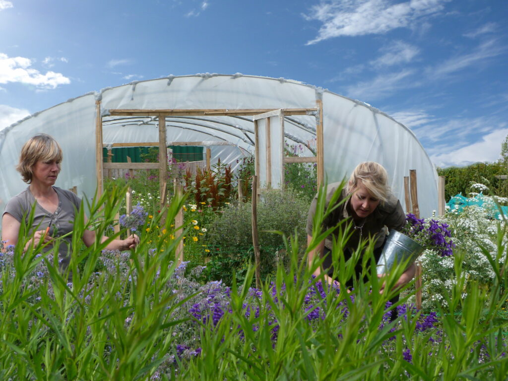 Caroline and Kate of the Sussex Cutting Garden cut their own grown flowers in front of the polytunnel on their flower farm on a sunny summer day.