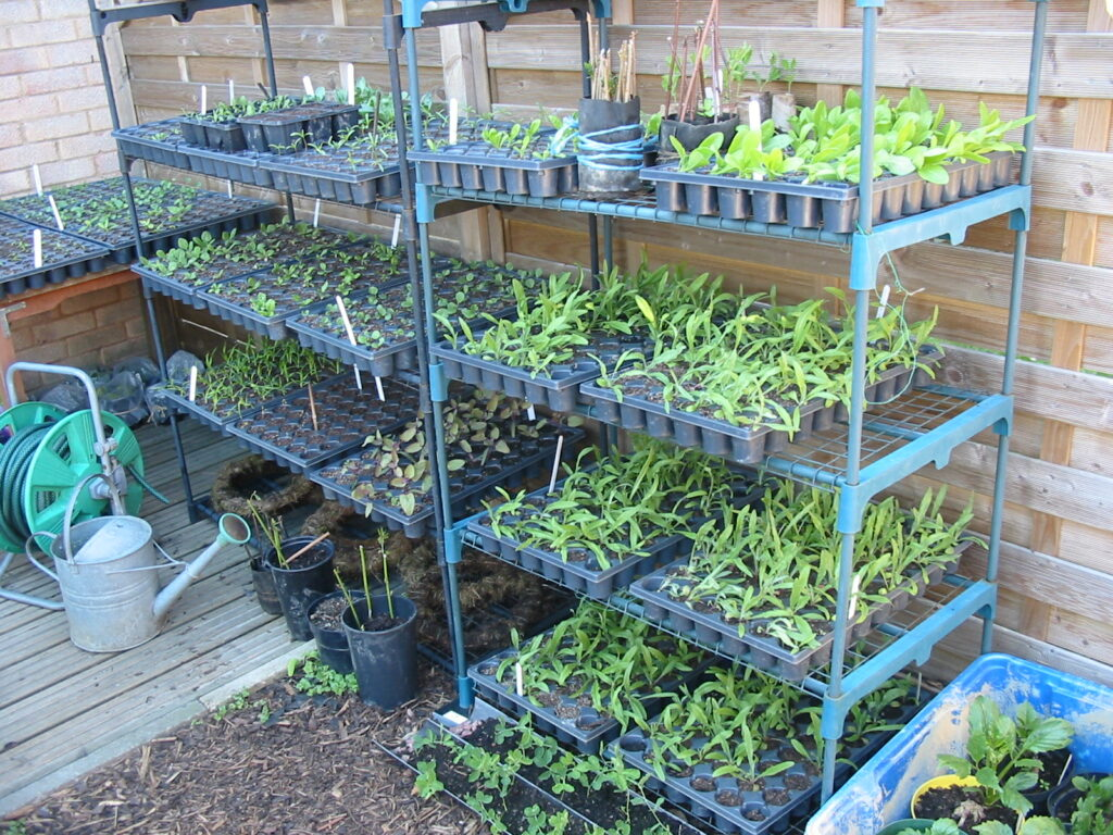 Eager seedlings stacked up on racks waiting to be planted at Sussex Cutting Garden.
