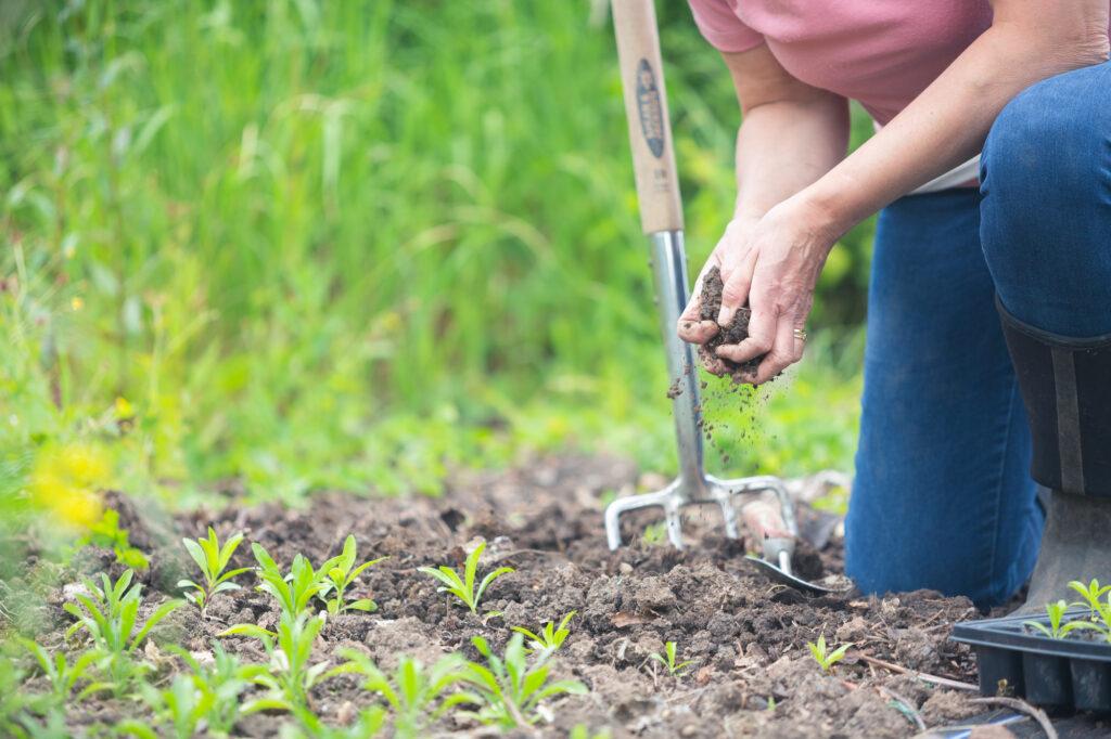 Hands crumble soil in preparation for planting seedlings in this flower bed. Tuckshop Flowers