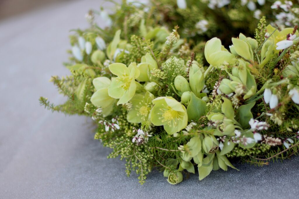 A green funeral wreath with textures providied by pale green hellebore flowers, snowdrps and Cornish white heather. Tuckshop Flowers.