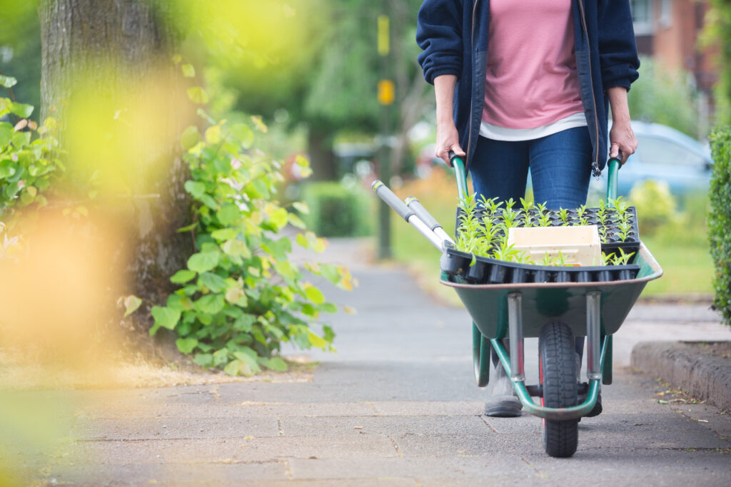 Carole of Tuckshop Flowers pushes a wheelbarrow of seedlings through the streets of Bournville on the way to her flower plot.