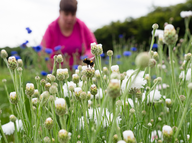 Claire of Plantpassion works in her flower field in Surrey