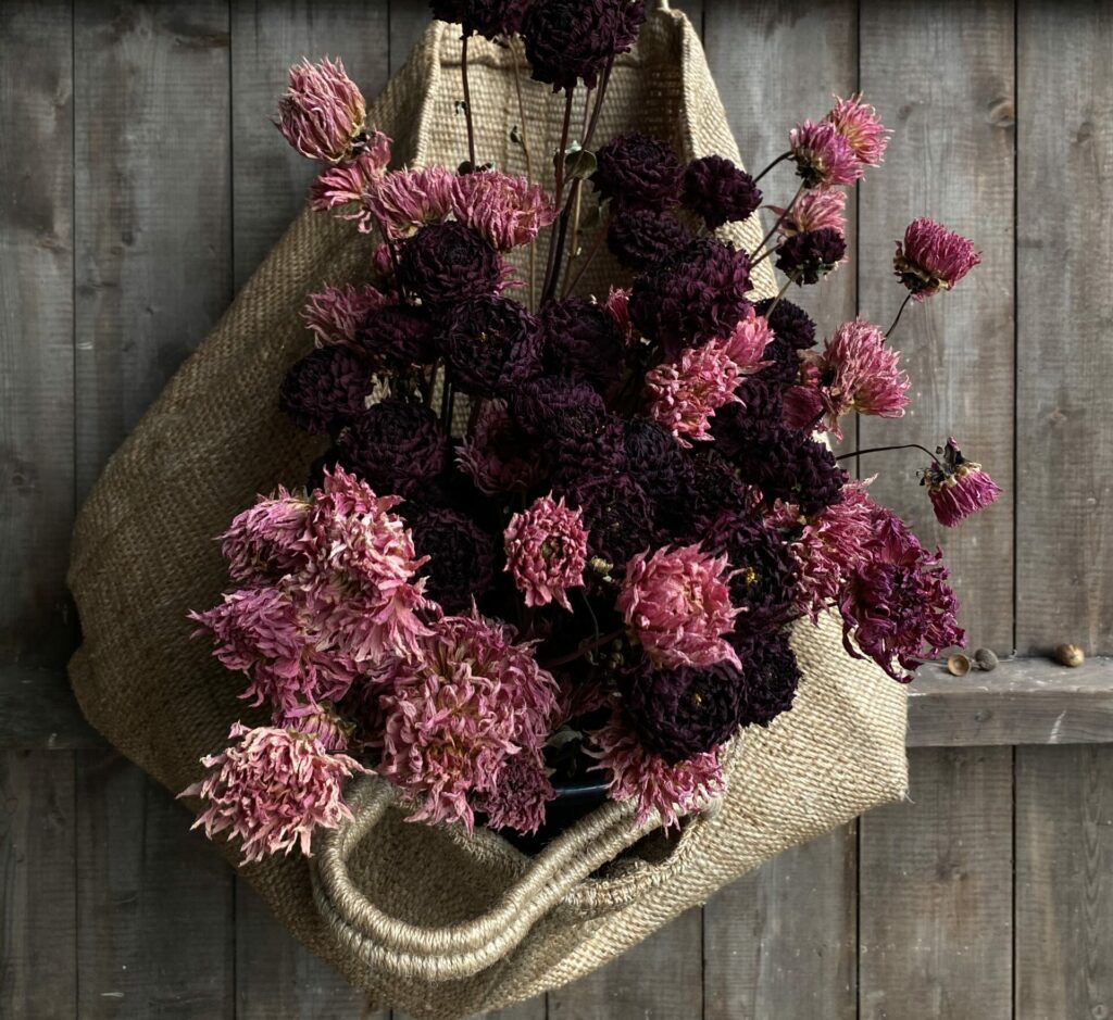 Dried pink dahlias in a hessian bag hang on a wooden door.