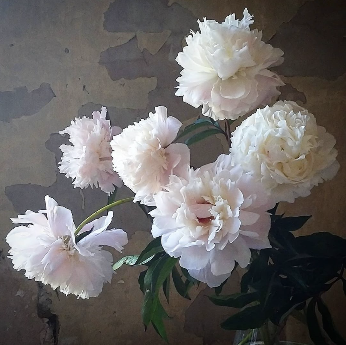 Gorgeous peonies - Floral Harvest, Suffolk