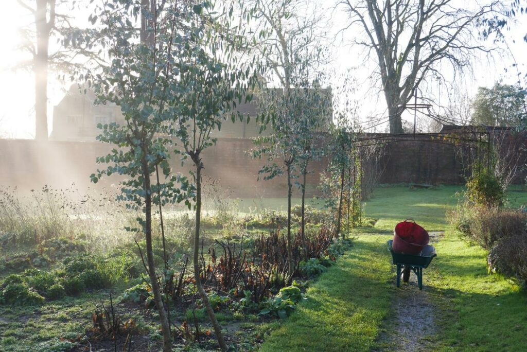 Mist rises over the walled garden at Stokesay Flowers in the early morning.