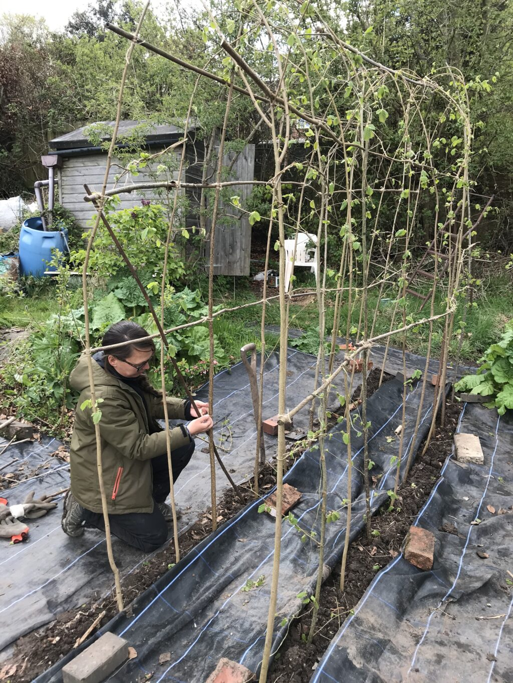 Emma builds a sweet pea arch with coppiced hazel poles at the Tuckshop Flowers plot.