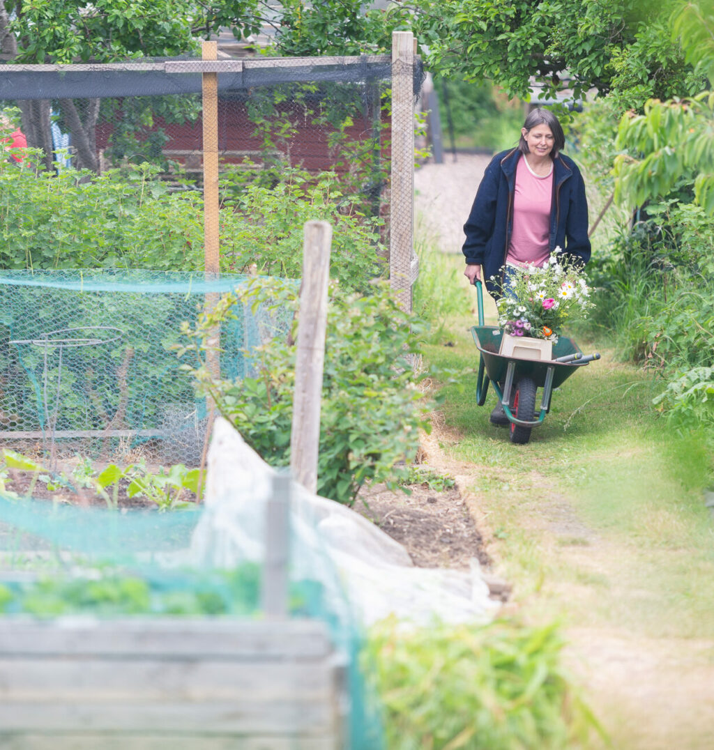 Carole of Tuckshop Flowers pushes a wheelbarrow of flowers back up the hill from her cutting patch.