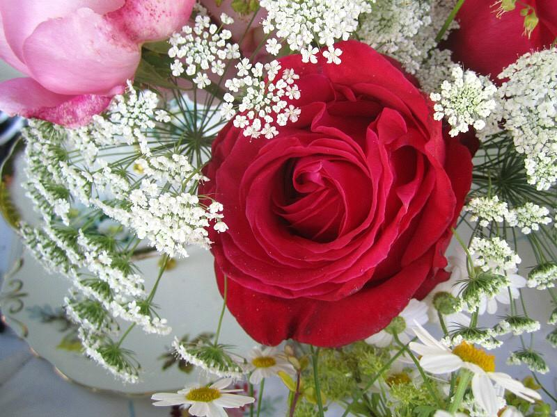 A red rose with ammi majus and daises by Tuckshop Flowers