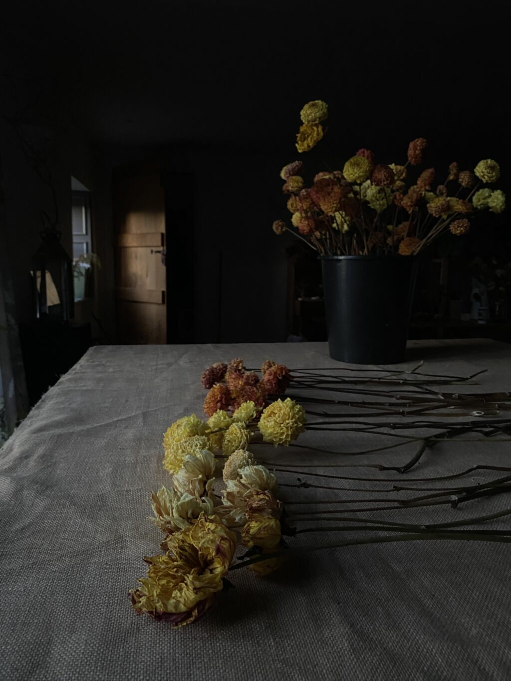 Just dahlias dried flowers on a table in a dark interior reminiscent of an old masters painting.