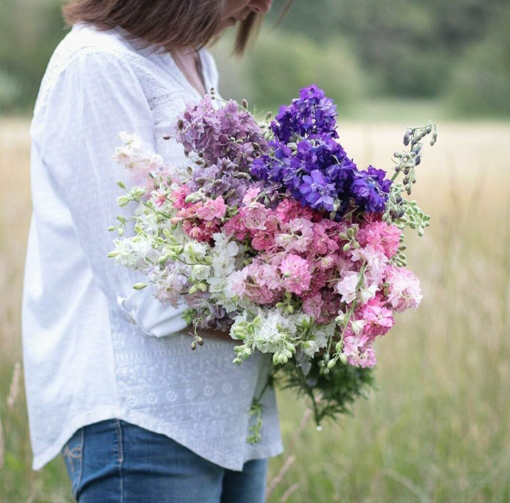 A woman holds a large armful of white, pink and purple Larkspur in a field at Pigpen Flowers