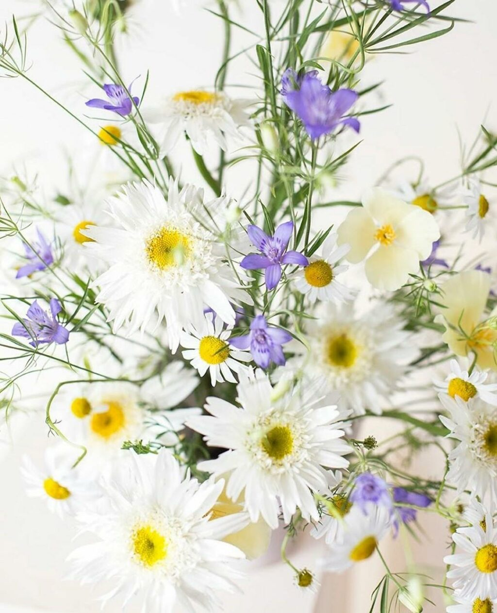 white daisies and violet harebells by Aesme Studios