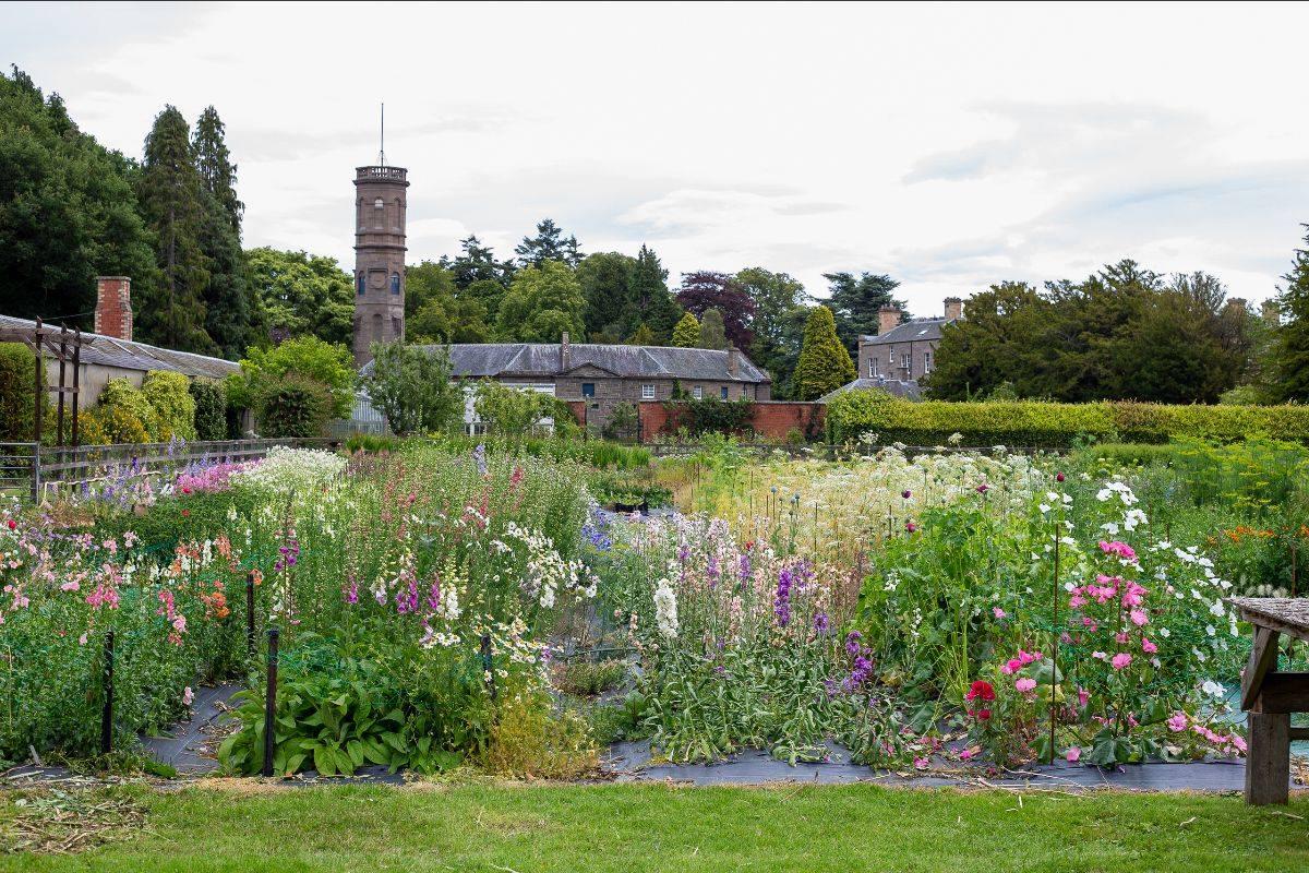 The flower field at Scottish Cut Flowers on the Errol Park Estate, Perthshire, Scotland