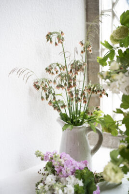 Allium nectaroscordum in a simple vase with grasses sit alongside a bouquet of lilac stocks and quaking grass for British Flowers Week 2021. Alexandra Barfoot Photography