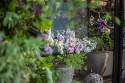 Lilac stocks in a vintage containers in the window at No21 flowers Aberystwth for British Flowers week 2021. Photo Naomi Campbell Photography