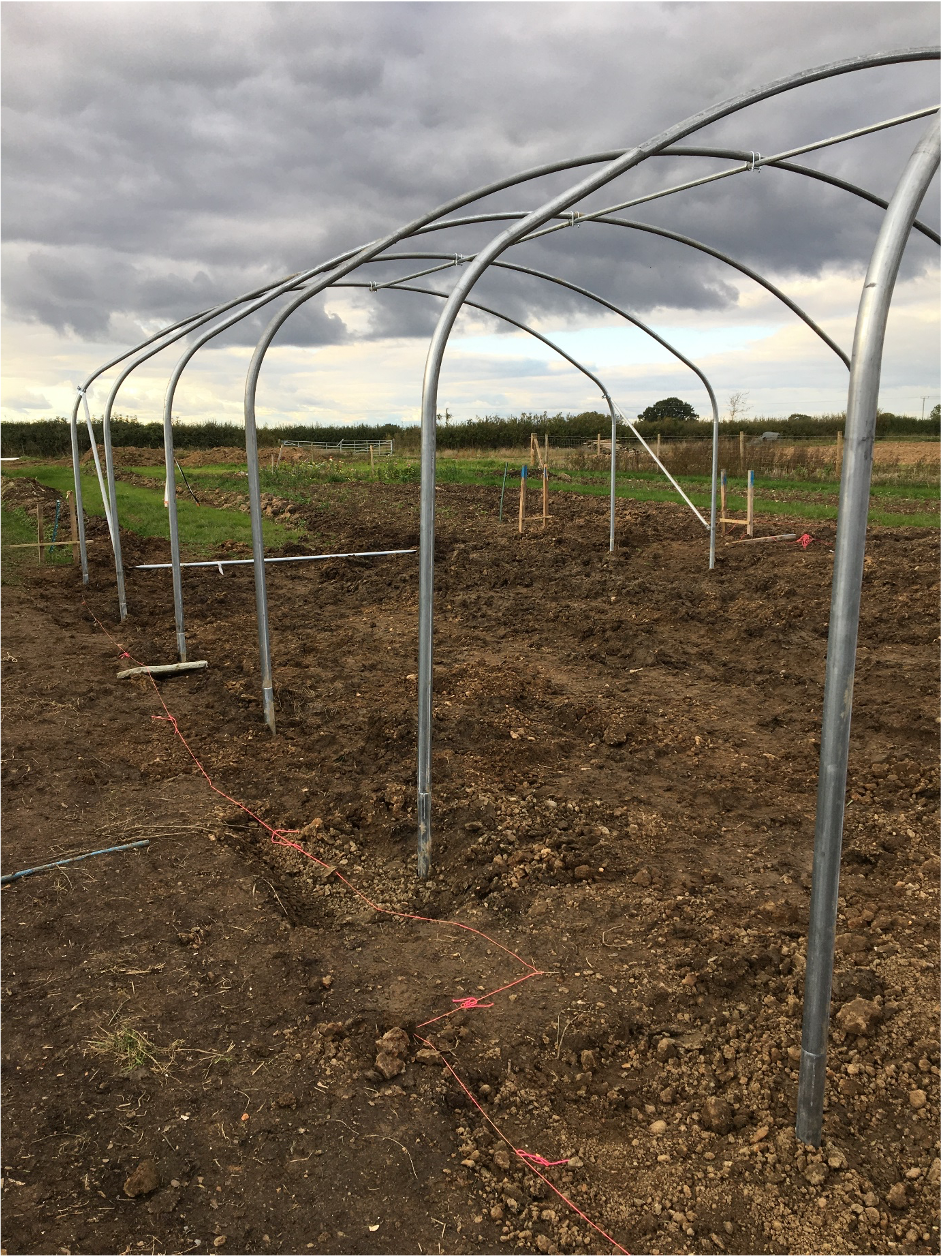 Pembridge Farm has invested in a polytunnel to extend its locally grown flower season