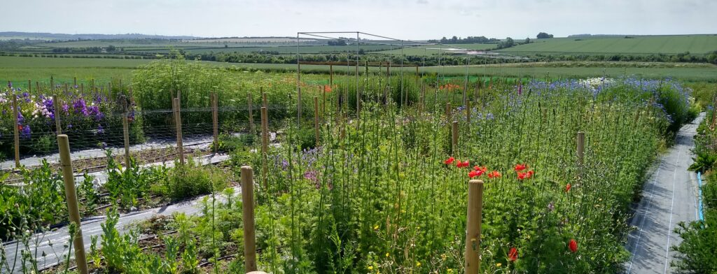 A view of the flower field at Natures Posy