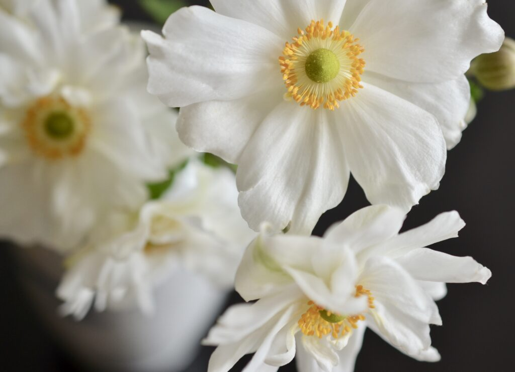 White Anemone flowers in a vase