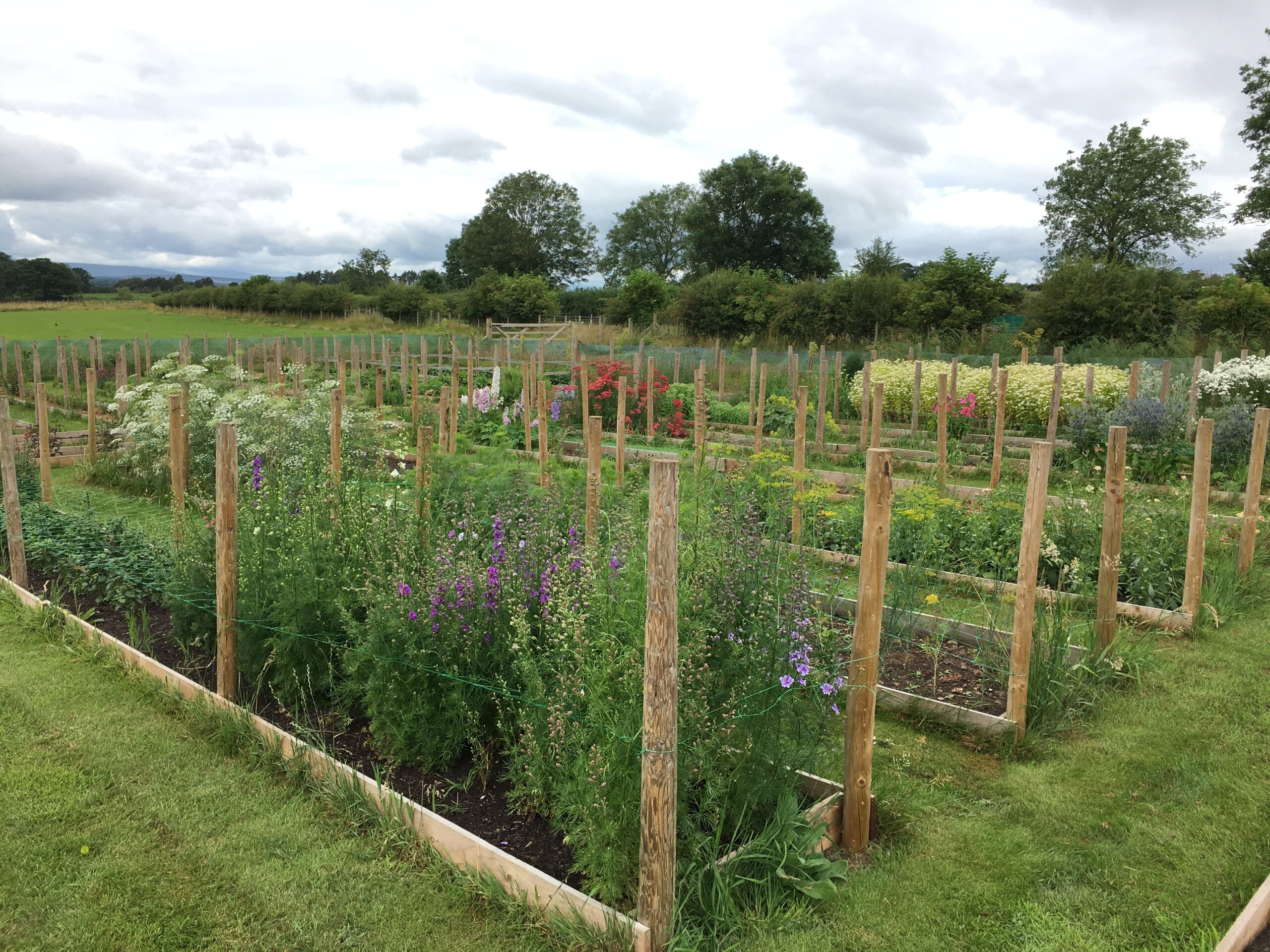 The cutting field at British flower grower The Fellside Flower Company.