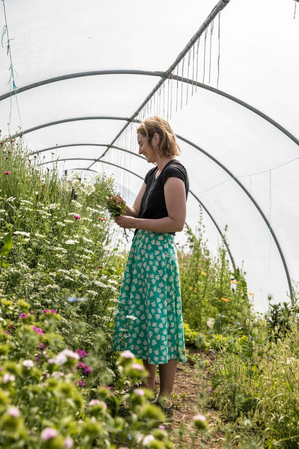Harriet Mullins of Sweetpeas and Sunflowers picking handfuls of flowers from her bountiful polytunnel