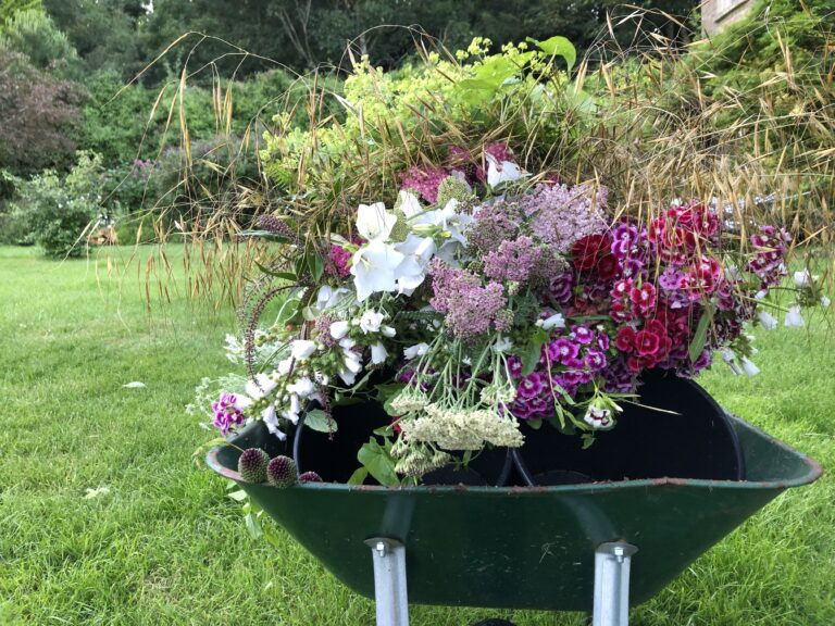 A wheelbarrow filled with freshly cut flowers at Walled Cottage Flowers
