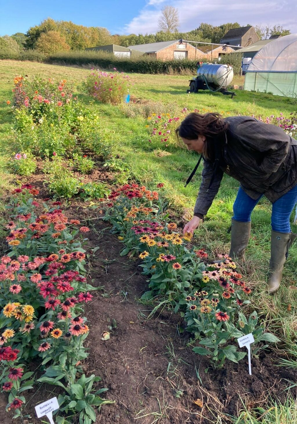 Josie of Brown's British Flowers, Cambridgeshire, inspects her rows of rudbeckia in the flower field. Photo by Petals and Amazon.